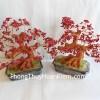 Cây san hô đỏ CA116