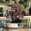 Cây thạch anh tím thân bonsai chậu kiểu nhật mới (Phước) KC121
