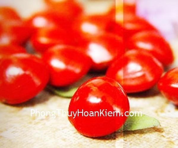 hat dau do Tranh hạt đậu đỏ (hạt đậu tương)