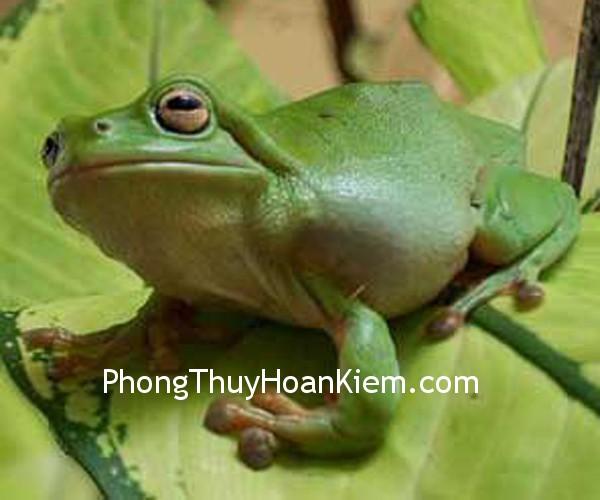 tranh ech Tranh ếch