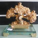 H512G 1 150x150 Cây đồng tiền vàng nhỏ H512G