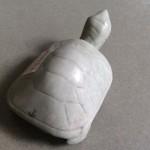 m084.2 150x150 Rùa ngọc xanh M084