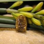 s6484 4.1 150x150 Phật bản mệnh đá mắt mèo nhỏ Phổ Hiền Bồ Tát (Thìn+Tỵ) S6484 4