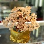 kc106.1 150x150 Cây thạch anh vàng gốc cổ thụ trên chậu kim nguyên bảo đống tiền KC106