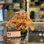 kc108.3 150x150 Cây thạch anh vàng nhỏ dáng truyền thống (cây chiêu tài) KC108