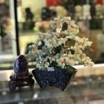 kc119.1 150x150 Cây đông linh thân bonsai chậu kiểu nhật mới (Phước) KC119