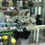 kc119.3 150x150 Cây đông linh thân bonsai chậu kiểu nhật mới (Phước) KC119
